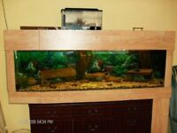 5'x18''x18'' fish tank for sale