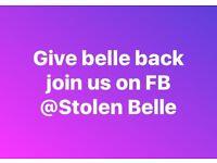 Help us find stolen Belle puppy Shar Pei