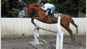 Demi pension jument thoroughbred!!!