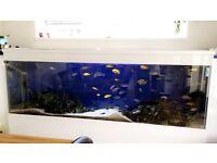 Large aquarium fish tank