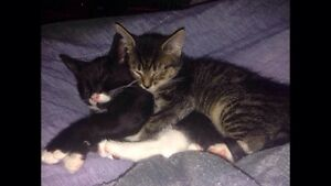 Has your cat had kittens? READ BEFORE POSTING THEM ON KIJIJI