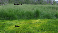 Yard cleaning/ Lawn mowing/ Grass Cutting/Mower Repair