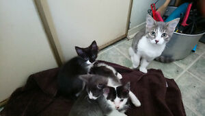 11-week-old kittens for rehoming