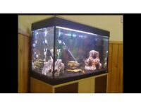 Fluva Roma 125 marine/tropical/cold water fish tank aquarium with setup (delivery/installation)