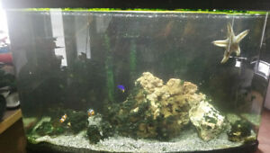 Floval Vista 23gal Saltwater set up