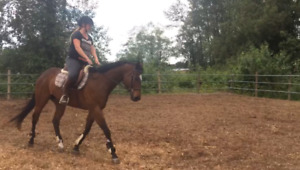 Talented young gelding for lease