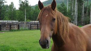 AQHA registered mare for sale Toffy