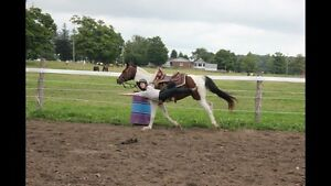 Trick Riding & Vaulting Camp Aug 22-26
