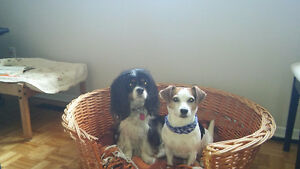 Garderie pour chien milieu familial/ Promeneuse