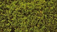 Taille de haies,arbuste et buissons