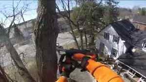 ■■■ BUDGET TREE REMOVAL AND STUMP GRINDING CALL NOW AND SAVE BIG Peterborough Peterborough Area image 1