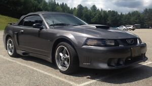 2003 Ford Mustang GT V8 Convertible FOR SALE Kawartha Lakes Peterborough Area image 4