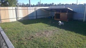 Terry's Pet Services Brisbane South West Preview
