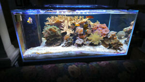 Saltwater Tank Livestock, Live Rock, Sand bed. Contents Sale