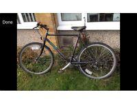 Saracen Limited Edition Men's Bike
