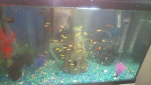 Cichlids and fry $2.00 ea or 3 for 5