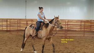 Tennessee Walking Horse (TWH) Herd Reduction