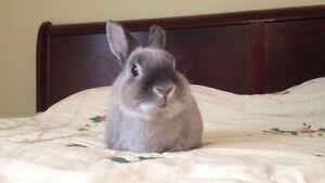 Cute bunny for sale - with Cage etc.