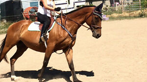TB horse for partboard