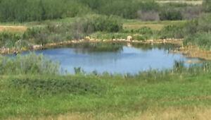 Prime Eastern Saskatchewan Parkland