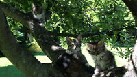 Petits bébé chats a donner