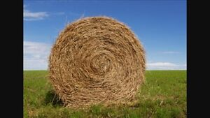 Wanted: Round Hay Bales