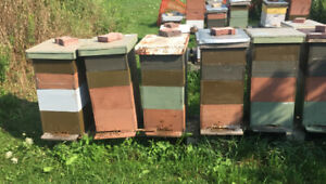 Bee Hives and Nucs