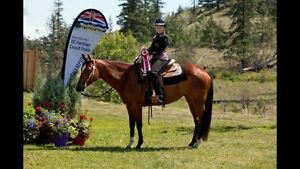 10 year old mare for lease