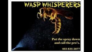 Wasp Whisperers - $80 Extermination + removal (Any size nest)
