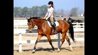 ISO Horse/Pony To Part-Board in Brussels