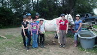 2015 horseback riding summer day camp