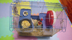 hamster and her cage, accessories.