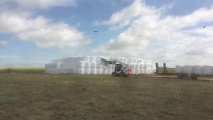 Silage and Hay bales for sale Moose Jaw Regina Area image 1