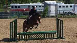 Talented Hunter Mare For Sale