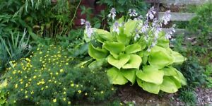Perennial plants/flowers