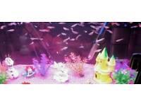 Aquarium fish guppies for sale