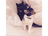 8month old kittens free to loving home