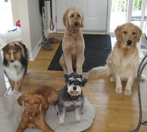 Boarding, Grooming and Daycare