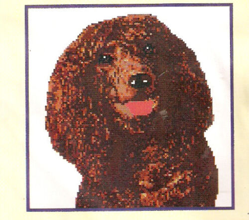 Irish Water Spaniel Counted Cross Stitch Complete Kit LAST ONE!