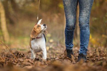 Browns Plains Dog Walking Service Hillcrest Logan Area Preview