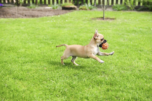 Small Dog Boarding, Sitting and Daycare in Scarborough