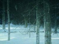 Framed Robert Bateman