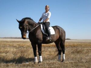 Warmblood mare for lease