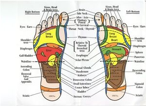 Berts Bowen Therapy and Reflexology Clinic South Plympton Marion Area Preview