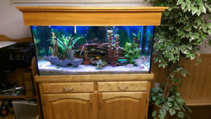 90 US Gallon aquarium with tons of accessories