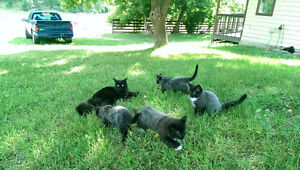 KITTEN'S Very Friendly, Adorable, Litter Trained!