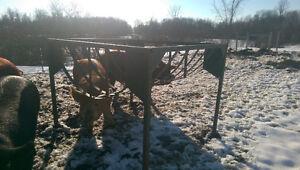 Goat Hay Feeder $300