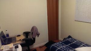 50 Collingwood St. Room for Rent in 3 bed apt - Nov to Apr Kingston Kingston Area image 1