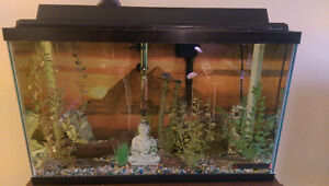 5 Convict Cichlids with Tank and Accessories