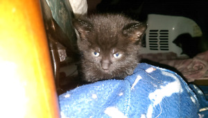 Kittens in need of a good home!!